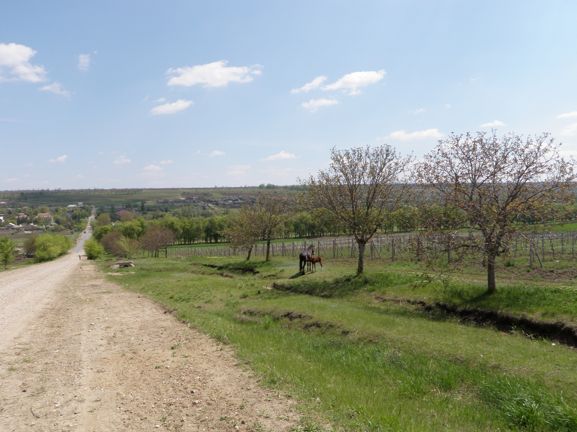 Typical Moldovan Landscape